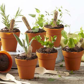 Herb Cupcake Flower Pots